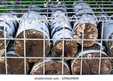 birch in a cage