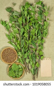 Birch. Dry plants for use in alternative medicine, phytotherapy, spa, herbal cosmetics. Preparing infusions, decoctions, tinctures. Used in powders, ointments, butter, tea, bath
