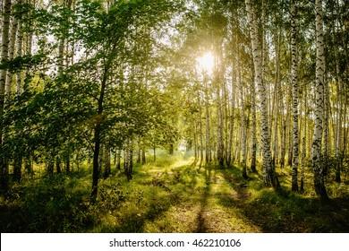 birch forest