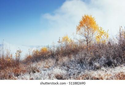 birch forest in sunny afternoon while autumn season. October mountain range in the first winter days. Autumn Landscape. Ukraine. Europe