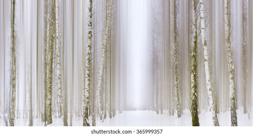Birch Forest / Birch Forest Winter Impressions