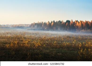 Birch grove in the evening fog. Autumn landscape