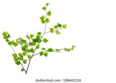 Birch leaves isolated on white background