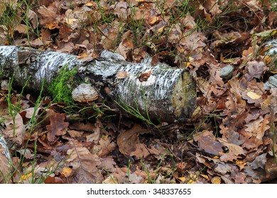 birch logs with mushrooms in autumn leaves