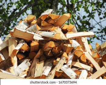 Birch logs stacked under a tree