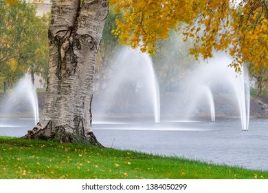 Birch tree and fountains on a windy autumn day in Oulu, Northern Finland.