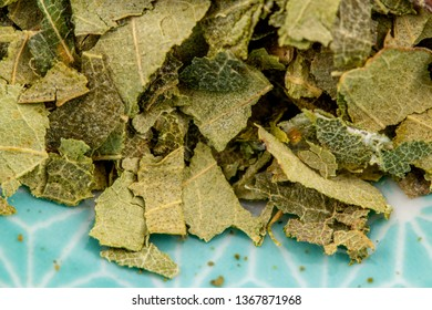 birch tree leaf detail, healthy herbs naturopathy