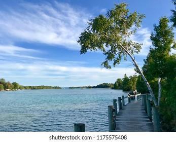 Birch Tree on Dock in Michigan