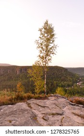 A birch tree standing solo on a rock.