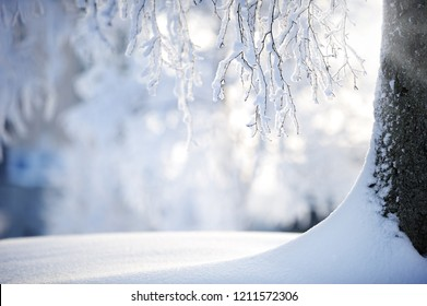 Birch tree trunk and branches covered with snow.