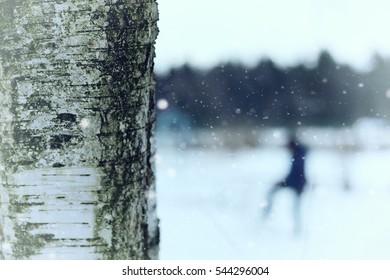 birch tree trunk in winter