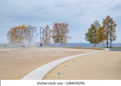 Birch trees and blowing sand on a windy autumn day at the Nallikari beach in Oulu, Finland.