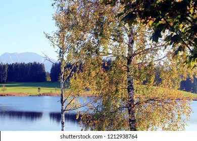 Birch trees in front of a lake, Alp mountains in the background, Bavaria