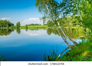 Birch trees on a background of a lake and blue sky.