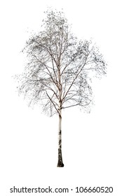 birch without leaves isolated on white background