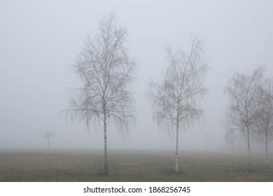 Birches in the autumn fog - Shutterstock ID 1868256745