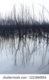 Birchwoods next to the lake: symmetrical reflection in the water