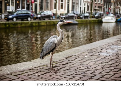 bird in amsterdam