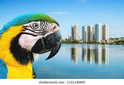 Bird Arara Caninde (macaw) and the lake of a urban park on a beautiful sunny day. The water of the lake with some buildings on the background and nature around. Photo at Campo Grande MS, Brasil.