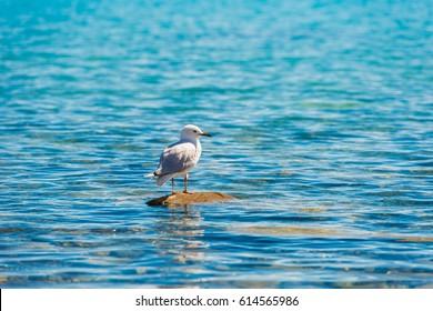 bird at Beautiful Lake Tekapo, NewZealand