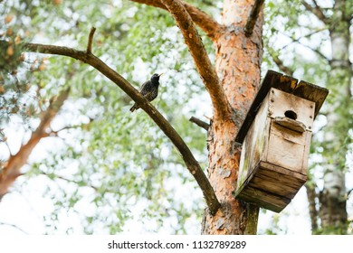 Bird and birdhouse from wood in the summer forest on natural background on tree