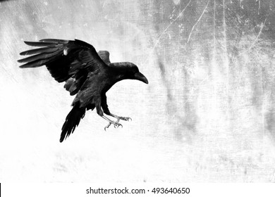 Bird - Black raven flying in moonlight. Scary, creepy, gothic setting. Cloudy night. Halloween. Old photograph stylized with scratches and dust. Old, analog photography filter.