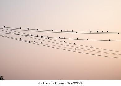 Bird black silhouette setting on line wire.