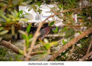 A bird in the branches
