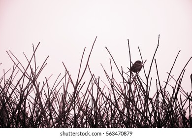 Bird in the Branches