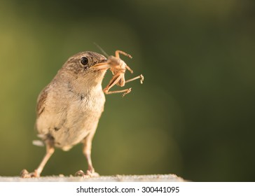Bird with a bug in its beak