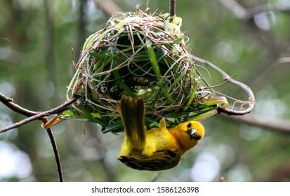 Bird Building Nest Images Stock Photos Vectors Shutterstock