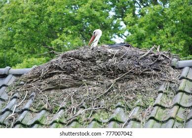 bird building a nest on top of a house.