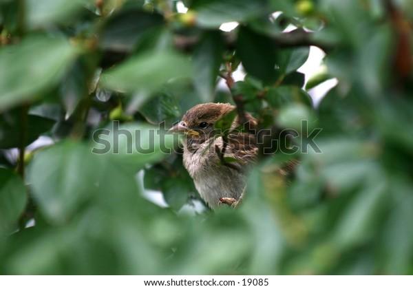 bird in a bush