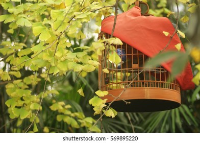 Bird cage with red textile cover in an oriental garden in Chengdu, China.