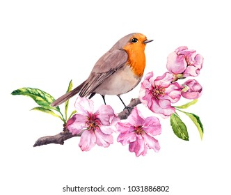 Bird in cherry, apple flowers. Springtime blossom, sakura branch. Watercolor