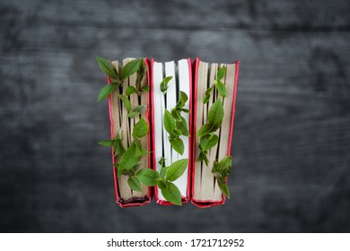 Bird cherry and leaves, leaf, green, greens, red, book, youth, wisdom, reading, life, style, book mania, garden, sophistication, love of books, wooden, natural, ecology, recycling, reuse, resources