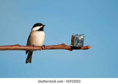 Bird. Chickadee is surprised to find a shiny present on a branch for him.