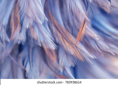 Bird, chickens feather texture for background, Abstract, postcard, blur style, soft color of art design