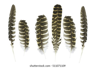 Bird cuckoo's feather isolated on white background with clipping path