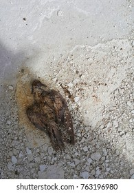 Bird Die because of Environment Pollution