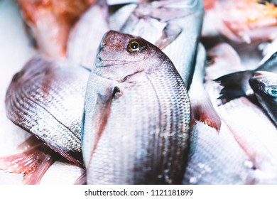 Bird dorado fish on ice background on the market, closup of fresh marine products, useful dietary sea food in restaurant, isolated group fish with shiny scales, frozen seafood after catching fishermen