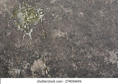 Bird droppings on concrete floor