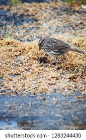 Bird eating birdseed