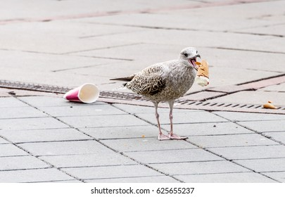Bird eating ice cream