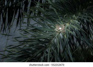 A bird egg in the nest on palm tree twig