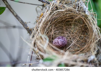 Bird eggs in nest on tree to hatch into the bird next