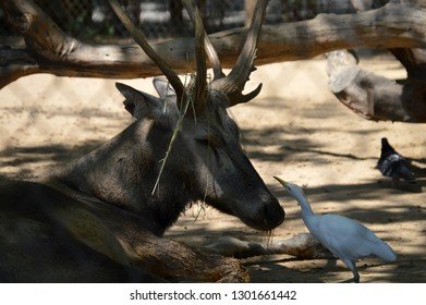 Bird and elk