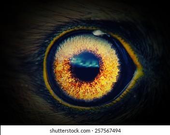 bird eye in the dark close-up