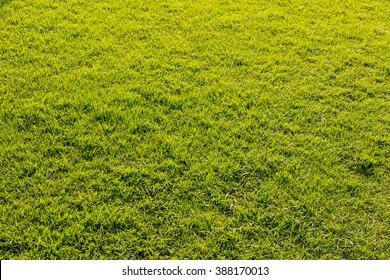 A bird eye view picture of grass field