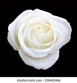 bird eye view of white rose on black